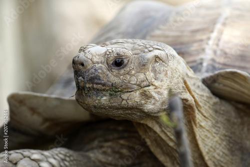 Aluminium Schildpad tortue