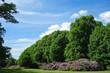 Leinwanddruck Bild - Alpenrosen im Hirschpark Hamburg Nienstedten