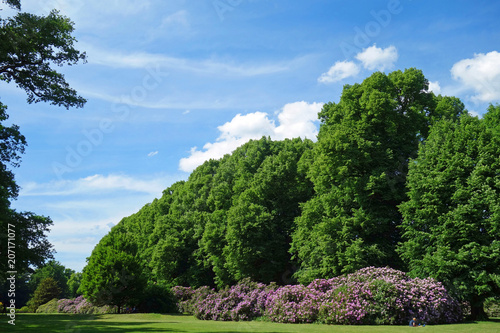 Leinwanddruck Bild Alpenrosen im Hirschpark Hamburg Nienstedten