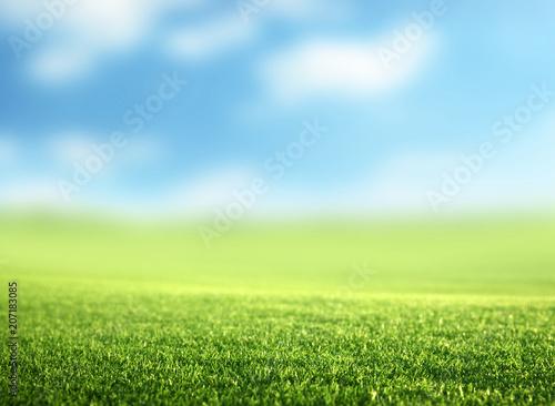 Fotobehang Lente field of spring grass (shallow DOF)