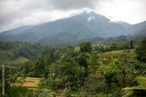 Fotobehang Rijstvelden Bali rice terraces in mountains in rainy weather. Rice fields of Jatiluwih. Volcano and Mount Agung among green rice fields . Cloudy, Fog