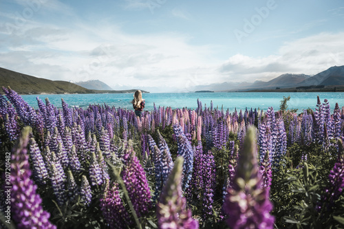 Canvas Blauwe hemel New Zealand - blond girl watching at scenic view of field with purple flowers and blue bay on background