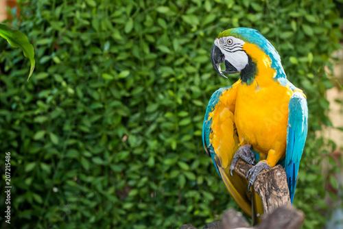 Fototapeta Parrot, lovely bird, animal and pet in the garden