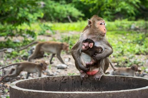 Fotobehang Aap Close up monkey.