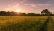 Sonnenuntergnag auf einer Sommerwiese- abendstimmung