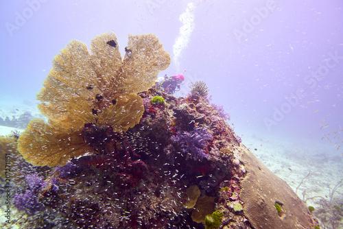 Fotobehang Purper Coral reef