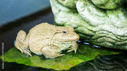 Fotobehang Kikker One frog in a pond.