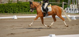 Horse, pony, in strong support in the suspension phase in the dressage course.. - 207283269