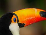 青い目のカラフルな鳥 - 207287443