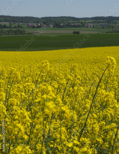 Canvas Honing yellow rape fields