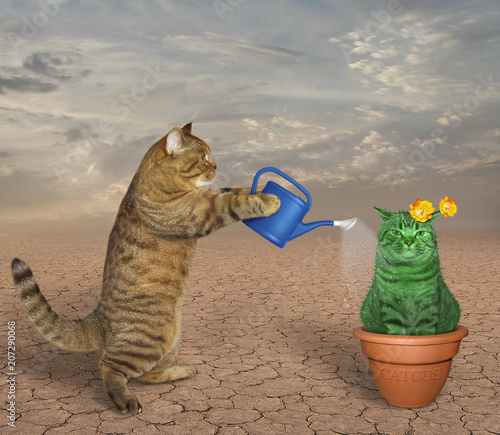 The cat waters a pot with an unusual cactus in the desert.