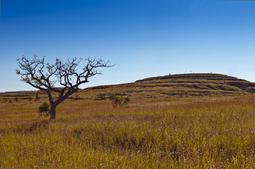 Savanna. Grass and tree. Madagascar