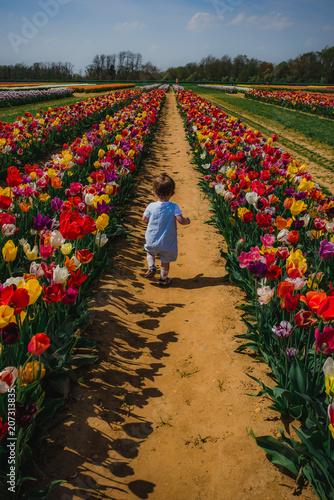 Fotobehang Tulpen Boy in Tulip field1