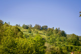Green trees and bushes growing on a hill and blue sky in the background - 207319085