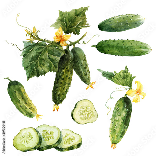 Watercolor cucumber set
