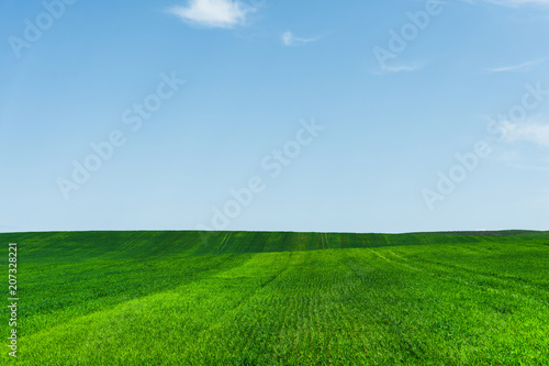 Aluminium Groene Fresh green wheat field and blue sky ideal for nature background