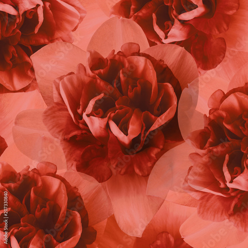 Fotobehang Rood traf. Floral red background of daffodils. Flower composition. Close-up. Nature.