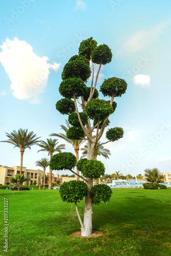 Exotic palm tree