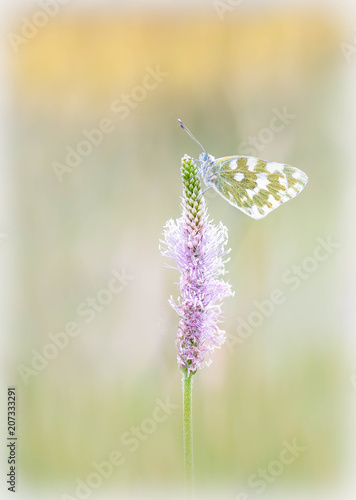 Fotobehang Vlinder Beautiful butterfly makros - colorful, fantasy