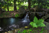 Japanese garden in Main Botanical Garden in Moscow - 207334857