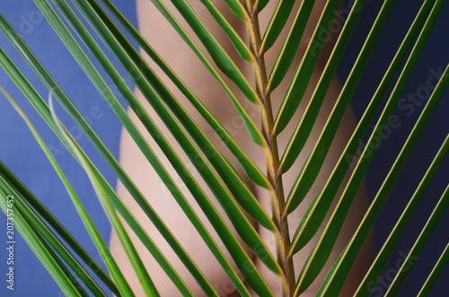 Beautiful nude woman behind a palm leaf.