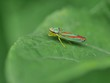 Garden insect