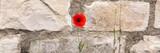 Einzelner roter Klatschmohn vor Kalksteinmauer