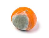 moldy mandarine on a white