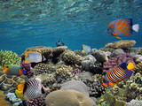 Tropical fishes and corals reef in ocean - 207380443