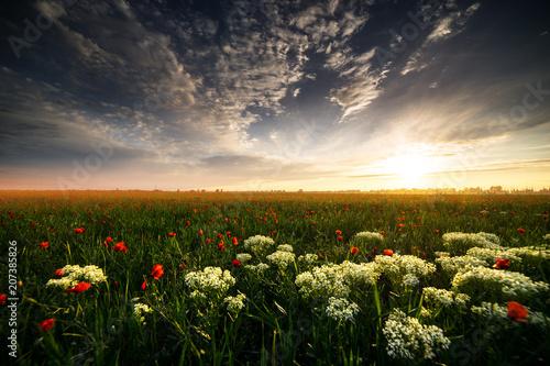 Aluminium Klaprozen Flowers field