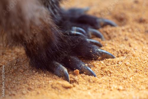 Aluminium Kangoeroe Kangaroo paws on the ground in nature