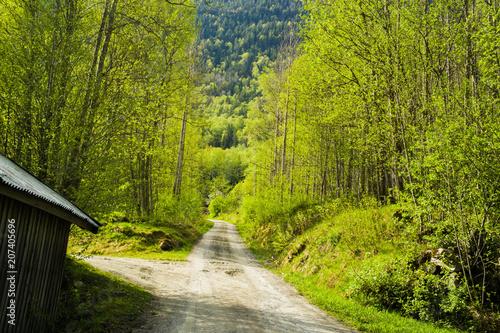 Fotobehang Weg in bos Las w Norwegi