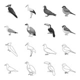 Gull, toucan and other species. Birds set collection icons in outline,monochrome style vector symbol stock illustration web.