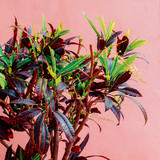 Green on a pink.  Plants on pink concept. Fashion minimal plant - 207429278