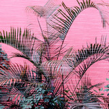 Palm on a pink.  Plants on pink concept. Fashion minimal design - 207429428