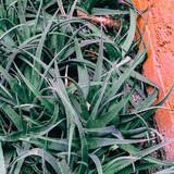 Plants on  pink concept. Aloe - 207429608