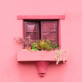 Pink vibes. Plants on pink concept. Canary Island - 207429813