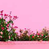 plants on  pink concept. Tropical flowers Canary island - 207430027