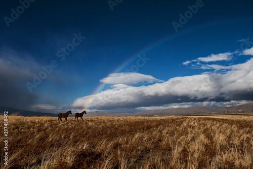 Aluminium Nachtblauw Wild horses with rainbow
