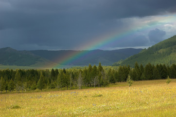 Rainbow above yellow meadow in Altai, Russia