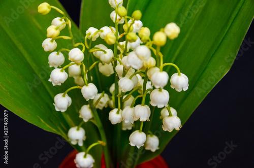 Fotobehang Lelietjes van dalen beautiful flowers on the table, field flowers