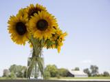 Sunflower Near The Barn