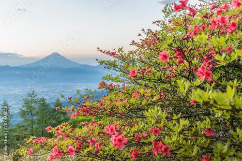 Aluminium Azalea Japanese Azalea flower and Mountain Fuji in spring season. Azalea or Tsutsuji - Spring Flowers in Japan
