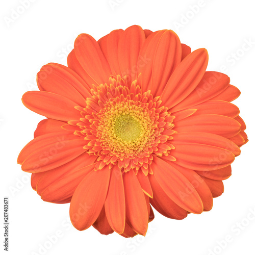 Fotobehang Gerbera Orange gerbera flower isolated on white background, view from above