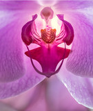 Macro Orhid flower in closeup