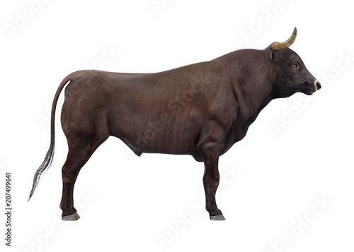 Bull Isolated