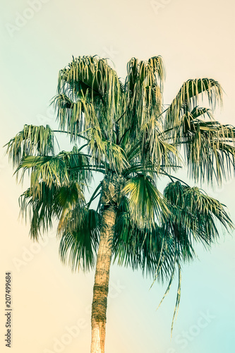 Palm Tree on Toned Pink and Turquoise Blue Duotone Sky Background. Trendy Pastel Colors. Surrealistic Vintage Style. Copy Space for Text. Tropical Seaside Ocean Beach Vacation. Hip Funky Atmosphere - 207499684
