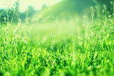 Green grass background with copy space. Summer nature landscape - 207501091