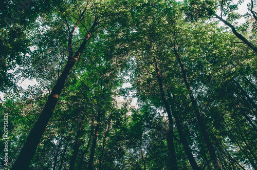 Fotobehang Bamboe Scenery of treetop in the green dense forest