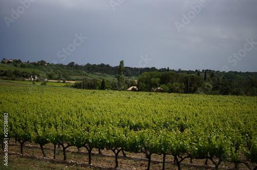 Aluminium Donkergrijs Berühmter Weinberg im Süden von Frankreich